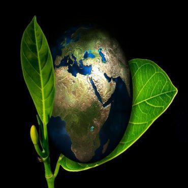 Bioética y ecología