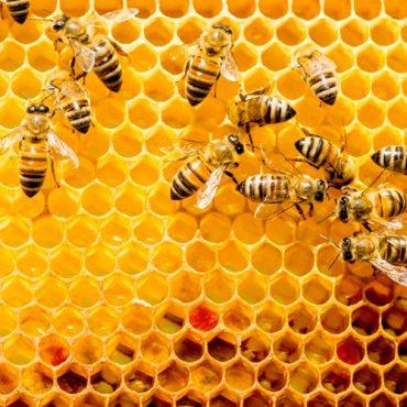 La colmena de la ética Aprendamos de las abejas