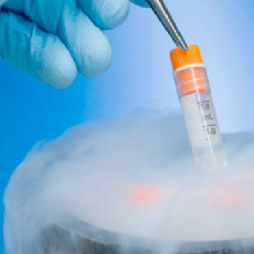 Embriones viables o no viables, ¿es esta la cuestión?
