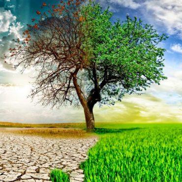 Urgencia ambiental y valores éticos